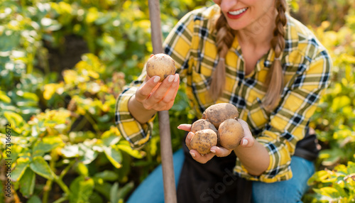 Farmer woman admiring the potatoes she harvested in the field Canvas Print