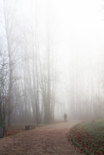 Cold Winter Morning - Fog - Alley