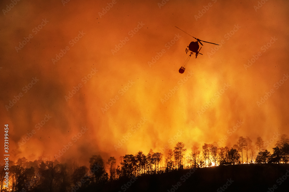 Fototapeta Fire fighting helicopter carry water bucket to extinguish the forest fire