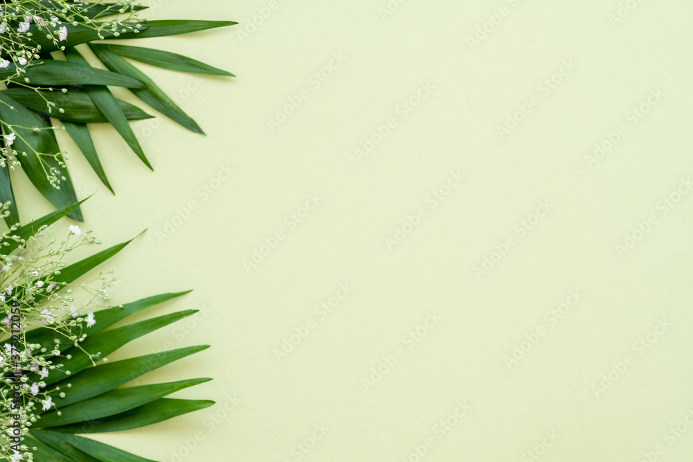Fototapeta Floral background. Invitation card. Green lush leaves white delicate flowers minimal composition isolated on light copy space. Natural decor. Holiday greeting. Foliage pattern.