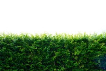 Green Hedges Or Tree Fence Walls Isolated On White Background