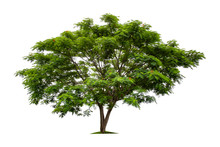 Big Green Tree Isolated On Whi...