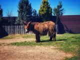 Fototapeta Zwierzęta - zwierzę w zoo