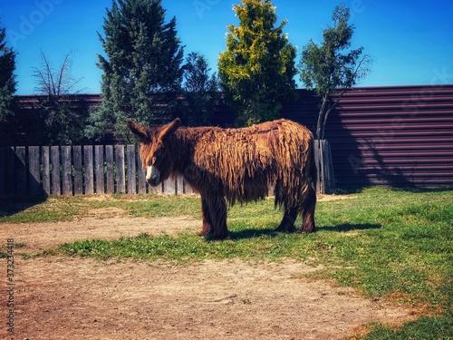 Fototapeta zwierzę w zoo obraz