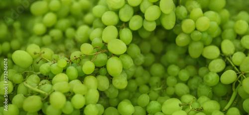 Fotografie, Tablou Elegant lush branches with ripe berries of green ripe grapes