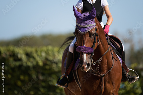 Fotografía Horseback riding, equestrian child is riding a horse
