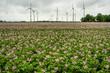 canvas print picture - Windpark bei Carolinensiel in Ostfriesland
