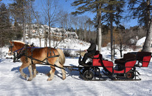 Team Of Horses Pulling A Sleigh In The Snow