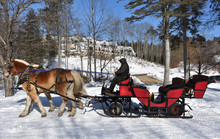 Red Winter Sleigh Being Pulled By Draught Horses