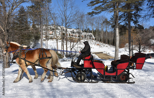 Valokuvatapetti Red Winter Sleigh Being Pulled by Draught Horses