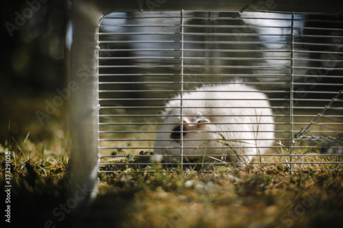 Photo closeup of a cute little hamster in a cage
