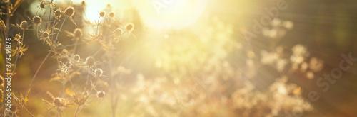 Blurred natural background Billede på lærred