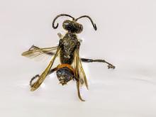 Mason Wasp In Macro Photography
