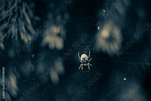 Photo Horror background spider web and Spider as symbols of Halloween