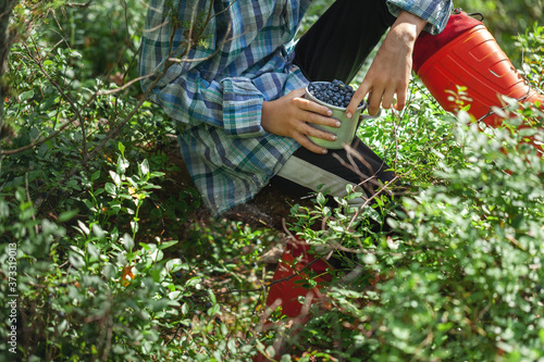Fotografija Kid hand holding bowl of freshly picked wild blueberries against bokeh green forest background