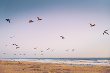 Empty Sand Beach And Flock Of ...