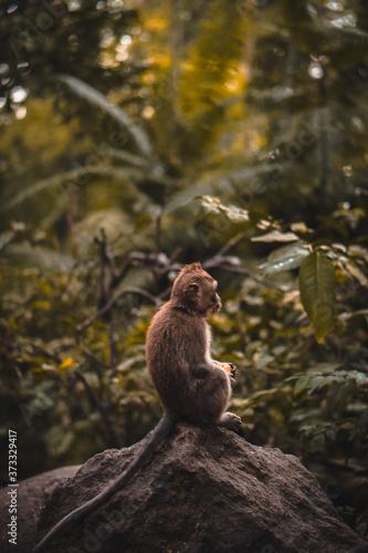 Fotografia Cute Macaque monkey eating a fruit