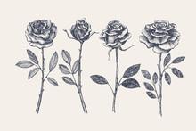 Big Set Of Hand-drawn Rose Flo...