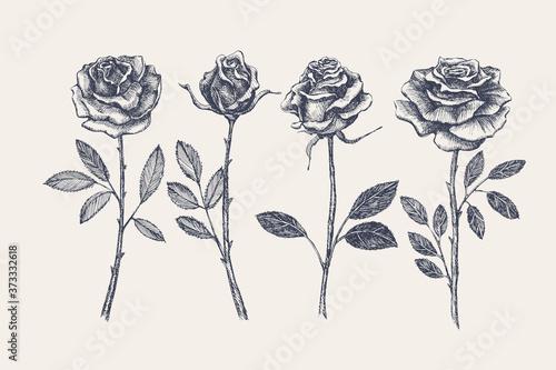 Fotografiet Big set of hand-drawn rose flowers