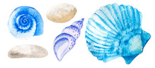 Three Watercolor Seashells And...