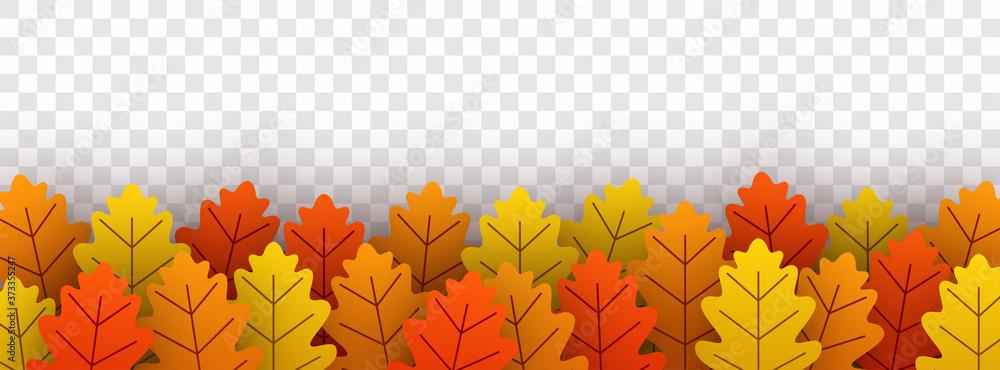 Fototapeta Autumn gold oak leaves on transparent background.
