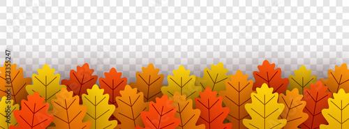Obraz Autumn gold oak leaves on transparent background. - fototapety do salonu