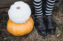 Halloween Holidays Concept. Pumpkins. Halloween Background. Autumn Mood. Witch Legs.
