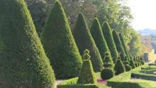 Art Topiaire Dans Un Jardin à...