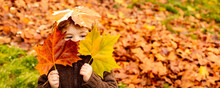 Kids Play In Autumn Park. Children Throwing Yellow Leaves. Child Boy With Oak And Maple Leaf. Fall Foliage. Family Outdoor Fun In Autumn. Toddler Or Preschooler In Fall.
