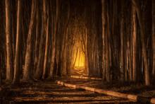Dark Forest Glow