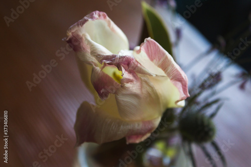 Fotografie, Obraz lonely wilting rose flower standing in vase against dark blurred background