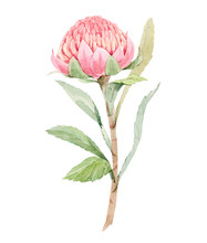 Beautiful Image With Watercolo...