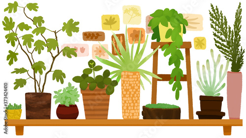 Set of plants in pots Wallpaper Mural