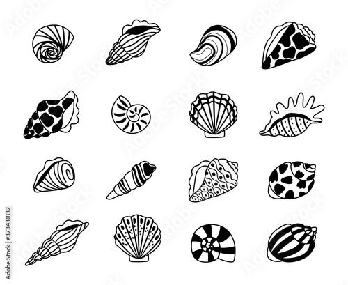 Foto Seashells sketch icons