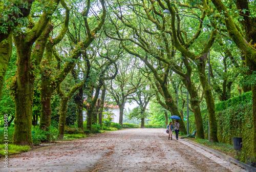 Alameda Santiago de Compostela verde paseo naturaleza Fototapete