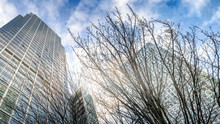 High-rise Buildings In The Business Center Of The City In Perspective Through The Branches Of Trees, London