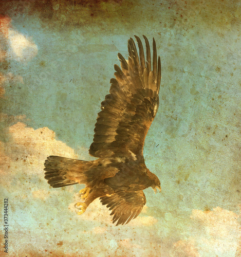 Fototapeta Flying eagle with wings spread against a blue sky with white clouds