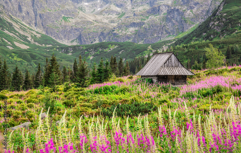 Alpine style beautiful landscape in the summer. Wooden house on a meadow with flowers. High Tatra Mounitains in the background.