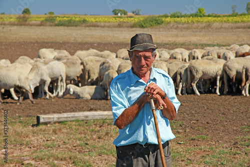 Papel de parede Portrait of a senior shepherd leaning on his staff with a flock of sheep on a fa