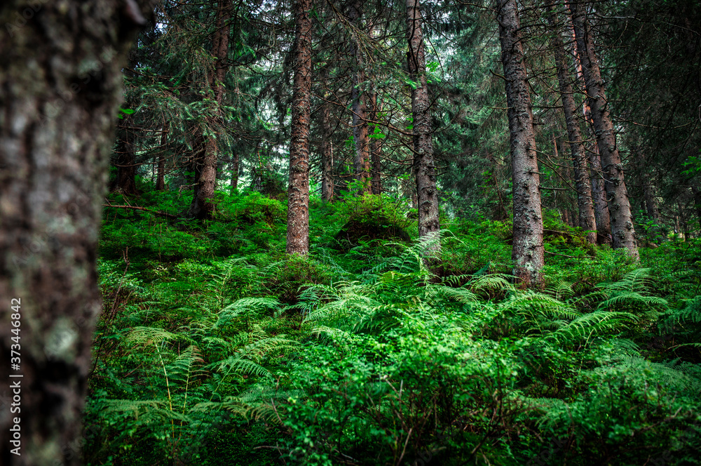 Green forest in the summer. Beautifull woods outdoor background. Mystery green nature enviroment.