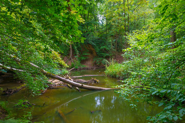 The shores of a stream in a green deciduous forest in sunlight in summer, Limburg, The Netherlands, August 23, 2020