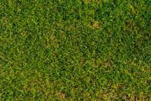 Soccer Field Texture Close Up....