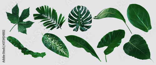 set of green monstera palm and tropical plant leaf isolated on white background Fototapeta