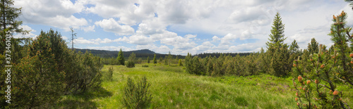 Canvas-taulu Wide View of spruce trees in the Jezerni Slat moorland in the Sumava Nature Park
