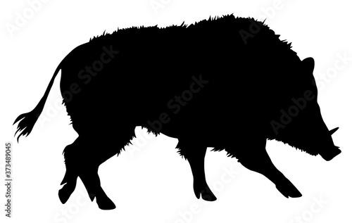 Obraz na plátně silhouette of wild boar vector