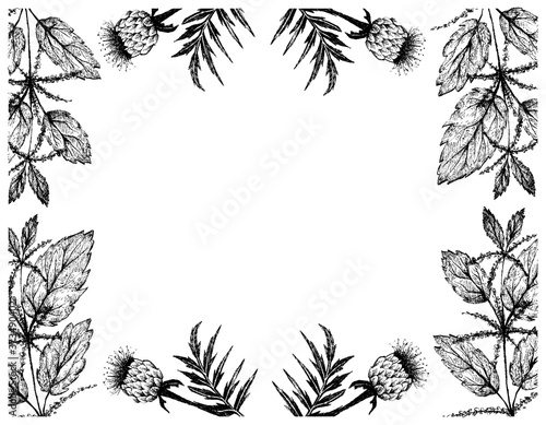 Fototapeta Herbal Flower and Plant, Hand Drawn Illustration Frame of Urtica Dioica or Stinging Nettle and Rhaponticum Carthamoides or Maral Root Plants, Used in Alternative and Folk Medicine