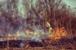 Leinwanddruck Bild - firefighter puts out grass / forest fire, dry grass burns, wind blows