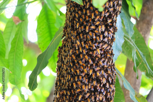 bees hive on the branch tree in the garden,honey have high energy Fototapete
