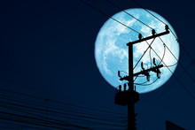 Super Sturgeon Blue Moon Back ...