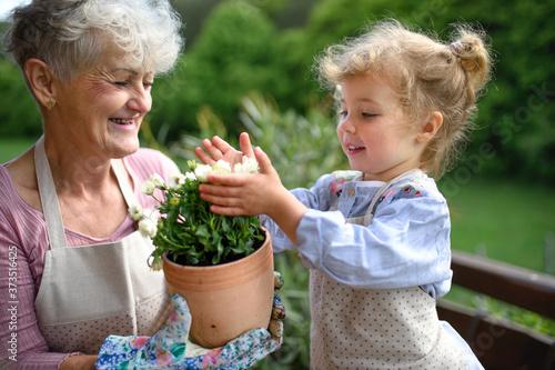 Fotografiet Senior grandmother with small granddaughter gardening on balcony in summer